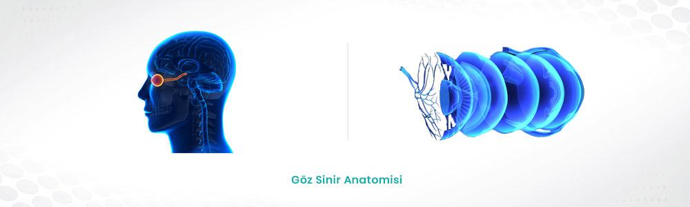 Nöro Oftalmoloji